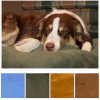 Furhaven Deluxe Gusseted Orthopedic Pet Mattress w/Medical Grade Foam, Washable Cover & Choice of 4 Colors! for $32.99